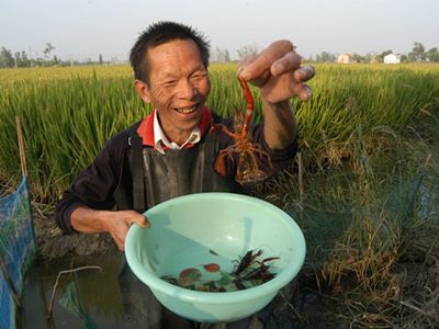怎么样提高小龙虾养殖的产量